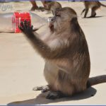 monkey bay phi phi 2 150x150 Monkey Bay Phi Phi