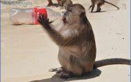 Monkey Bay Phi Phi_2.jpg