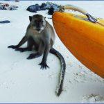 monkey beach phi phi 6 150x150 Monkey Beach Phi Phi
