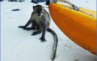 Monkey Beach Phi Phi_6.jpg