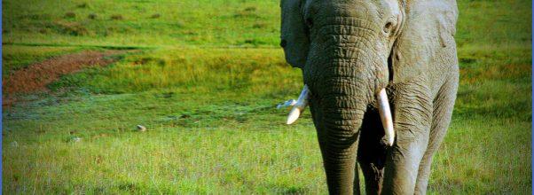 Sabi Sands South Africa safari - Safari information for your South ...