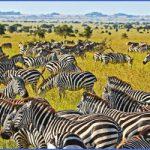 tanzania 11 150x150 Tanzania