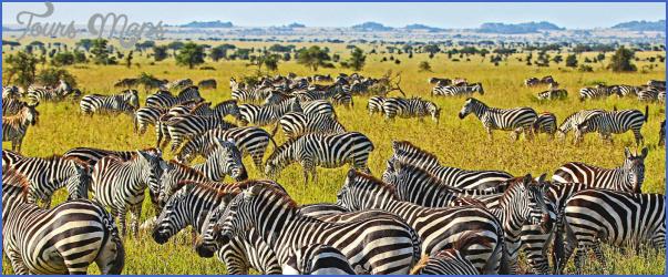 tanzania 11 Tanzania