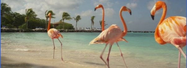 The Best Aruba Luxury Resort_0.jpg