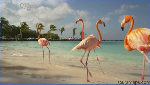 The Best Aruba Luxury Resort_0.jpg