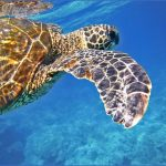 the top 3 things to do in grand cayman 10 150x150 The Top 3 Things to Do in Grand Cayman