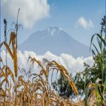 you have all the reasons to climb mount kilimanjaro dont miss it 5 150x150 You Have All the Reasons to Climb Mount Kilimanjaro   Dont Miss It