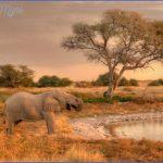 africa national wildlife travel 10 150x150 Africa National Wildlife Travel