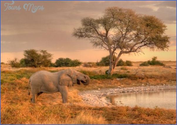 africa national wildlife travel 10 Africa National Wildlife Travel