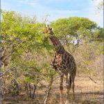 africa national wildlife travel 12 150x150 Africa National Wildlife Travel