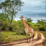africa national wildlife travel 13 150x150 Africa National Wildlife Travel