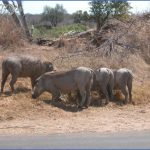 Africa National Wildlife Travel_15.jpg
