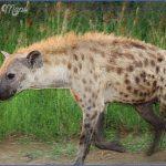 africa national wildlife travel 3 150x150 Africa National Wildlife Travel