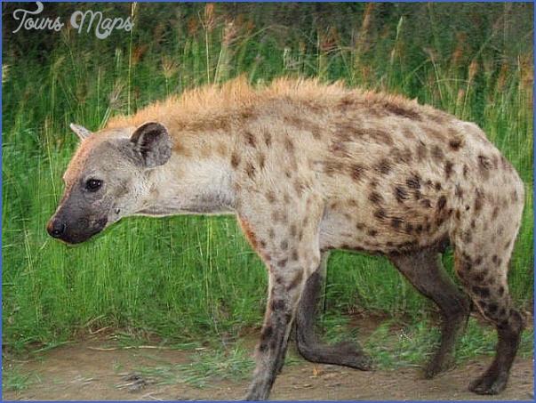 africa national wildlife travel 3 Africa National Wildlife Travel