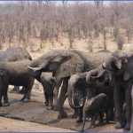 africa national wildlife travel 5 150x150 Africa National Wildlife Travel