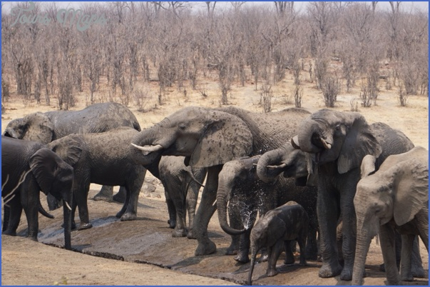 africa national wildlife travel 5 Africa National Wildlife Travel