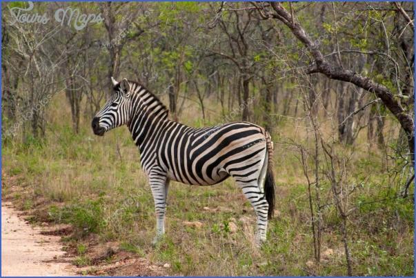 africa national wildlife travel 6 Africa National Wildlife Travel