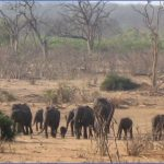 Africa National Wildlife Travel_7.jpg