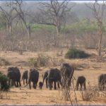 africa national wildlife travel 7 150x150 Africa National Wildlife Travel