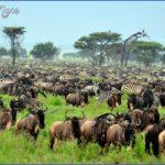africa national wildlife travel 9 150x150 Africa National Wildlife Travel