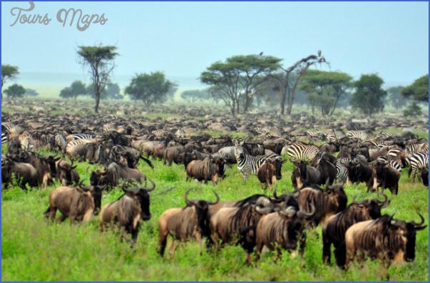 africa national wildlife travel 9 Africa National Wildlife Travel