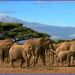 africa top wildlife travel destinations  0 150x150 Africa Top Wildlife Travel Destinations