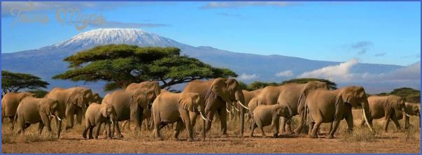africa top wildlife travel destinations  0 Africa Top Wildlife Travel Destinations