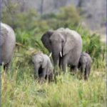 africa top wildlife travel destinations  10 150x150 Africa Top Wildlife Travel Destinations