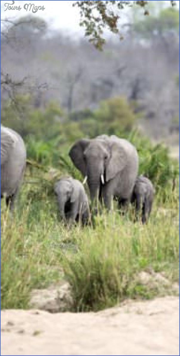africa top wildlife travel destinations  10 Africa Top Wildlife Travel Destinations