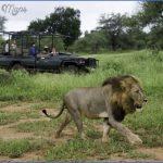 africa top wildlife travel destinations  11 150x150 Africa Top Wildlife Travel Destinations