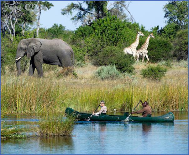 africa top wildlife travel destinations  3 Africa Top Wildlife Travel Destinations