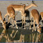 africa top wildlife travel destinations  5 150x150 Africa Top Wildlife Travel Destinations