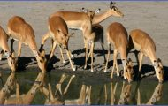 Africa Top Wildlife Travel Destinations _5.jpg