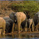 africa top wildlife travel destinations  6 150x150 Africa Top Wildlife Travel Destinations