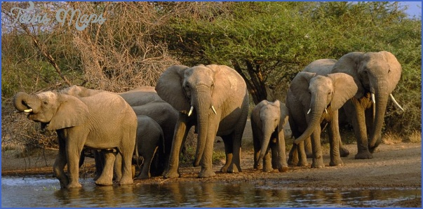 africa top wildlife travel destinations  6 Africa Top Wildlife Travel Destinations