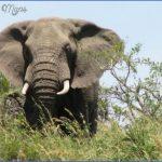 africa top wildlife travel destinations  7 150x150 Africa Top Wildlife Travel Destinations