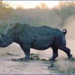 africa top wildlife travel destinations  9 150x150 Africa Top Wildlife Travel Destinations