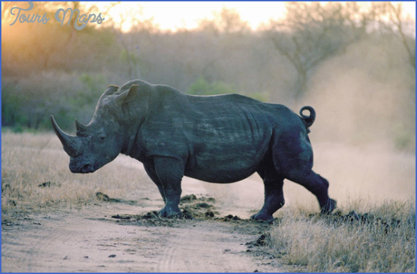 africa top wildlife travel destinations  9 Africa Top Wildlife Travel Destinations