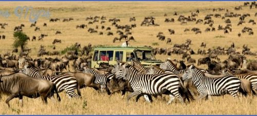 Africa Wildlife Safari Travel_1.jpg
