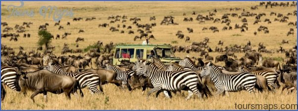 africa wildlife safari travel 1 Africa Wildlife Safari Travel