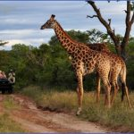 Africa Wildlife Safari Travel_3.jpg