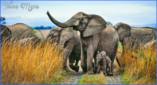 Africa Wildlife Safari Travel_5.jpg
