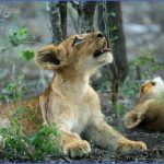 Africa Wildlife Travel Photography _0.jpg