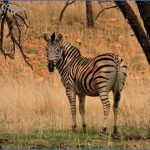 Africa Wildlife Travel Photography _10.jpg