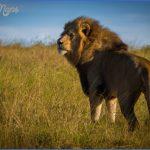 africa wildlife travel tours 1 150x150 Africa Wildlife Travel Tours