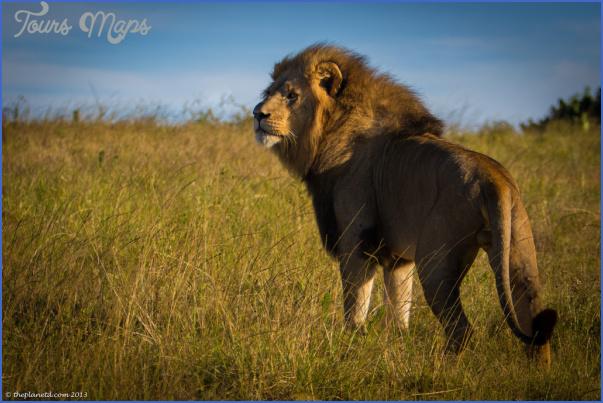 africa wildlife travel tours 1 Africa Wildlife Travel Tours