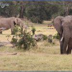 africa wildlife travel tours 11 150x150 Africa Wildlife Travel Tours