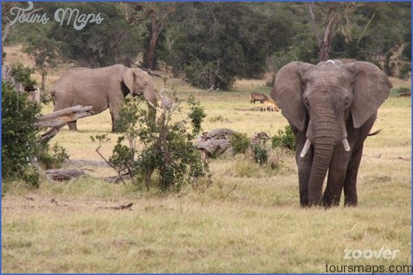 Africa Wildlife Travel Tours_11.jpg