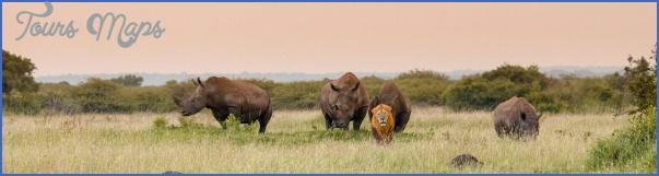africa wildlife travel tours 14 Africa Wildlife Travel Tours