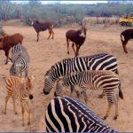africa wildlife travel tours 15 150x150 Africa Wildlife Travel Tours